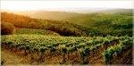 Италия - лучшее направление для винного туризма (по версии TripAdvisor)
