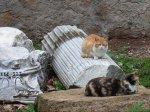 В Италии квартиру за ?230 000 унаследовали бездомные коты